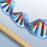 Маркеры ДНК, РНК