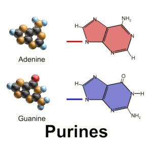 Нуклеозиды, нуклеотиды, пурины, пиримидины